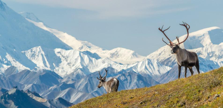 Wildlife in Denali National Park, Alaska