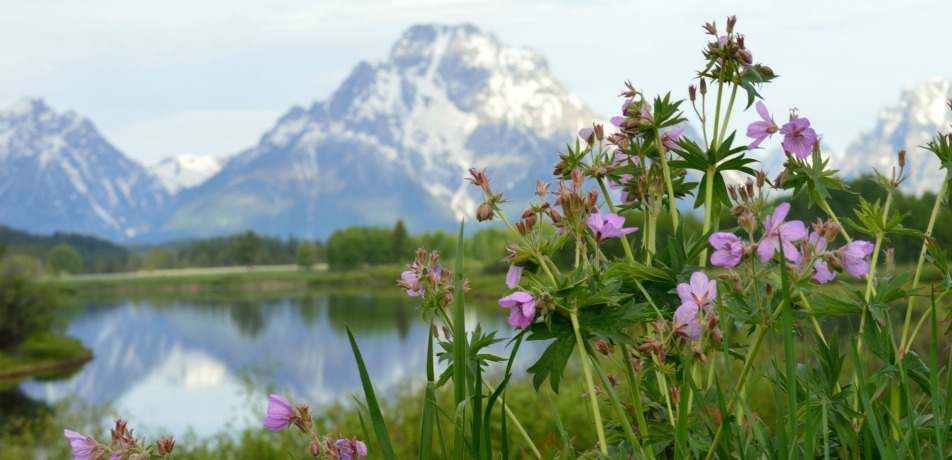 Jackson Hole, Wyoming in the spring time