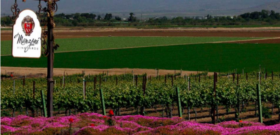 Manzoni Winery