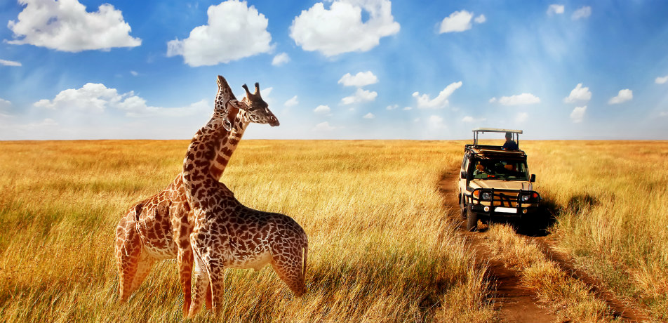 The Real Cost of an African Safari: From Budget to | ShermansTravel