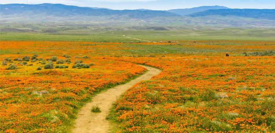 Super bloom in California