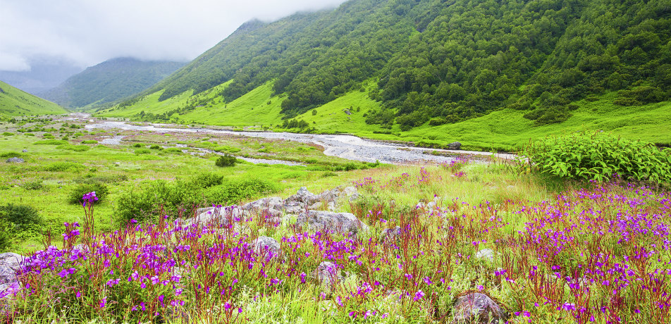 Valley of the Flowers, India