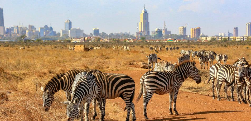 Zebras in Nairobi, Kenya