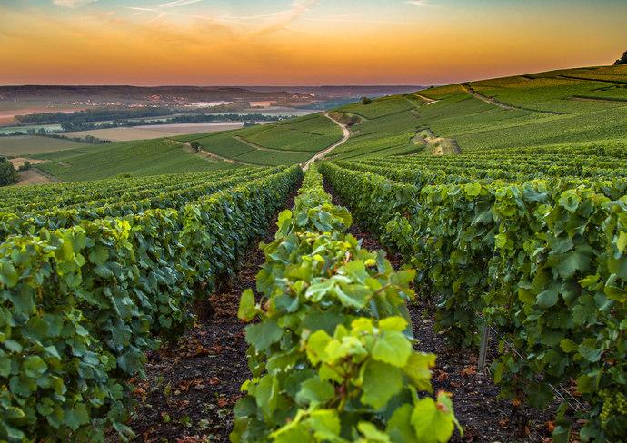 The Sweet Spot France S Champagne Region Shermanstravel