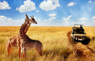 The Real Cost of an African Safari: From Budget to