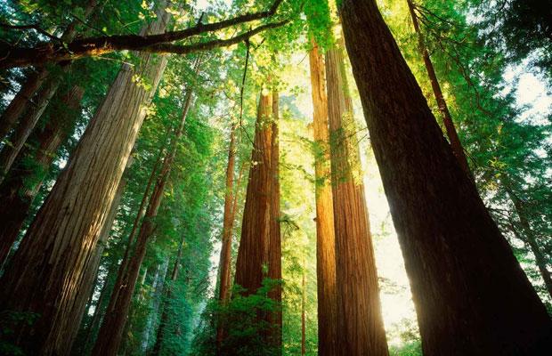 California Redwoods Ecotourism