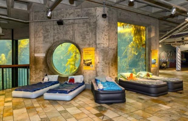 Seashore Sleepover at Kelp Forest Exhibit