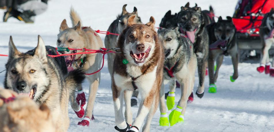 Iditatrod Race in Alaska