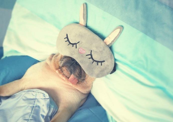 Pug sleeping in eye mask