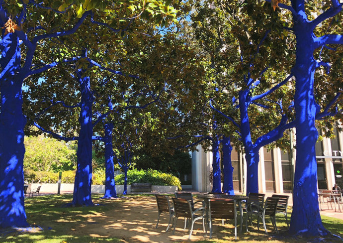 The Blue Trees art installation at Palo Alto City Hall