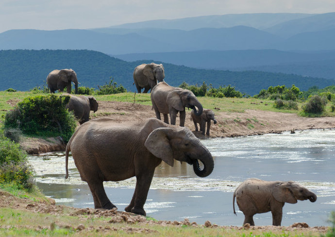 Addo, South Africa (Eastern Cape)